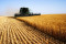 Grains Down Amid Cooler Weather in US, but Heatwave Looms in Europe