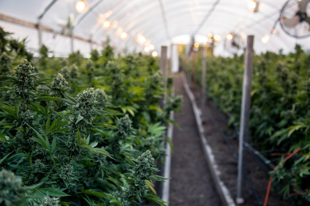 5 Things You Need to Know About the Cannabis Industry
