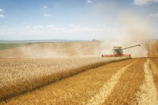 Grains Positive Amid Weak Crop Conditions