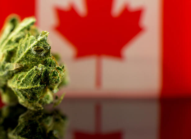 Medical Canada Cannabis Stocks