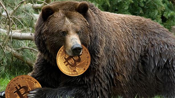 Bear bitcoin