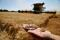 FILE PHOTO: A French farmer displays two ears of wheat as he harvests his field in Rumilly