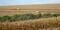 Colheita de milho em Xanxerê (SC)