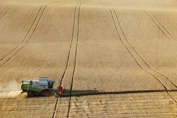 A combine harvests wheat in a field in Stavropol Region
