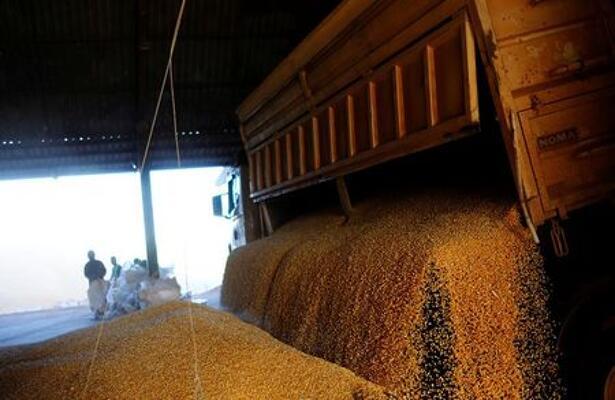 IMAGEN DE ARCHIVO. Hombres trabajando cerca de un camión que descarga maíz de invierno cerca de Sorriso, en el estado de Mato Grosso, Brasil