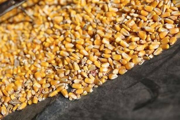 Imagen de archivo referencial de granos de maíz en un contenedor en la base de un tornillo transportador en una granja en Buda, Illinois, Estados Unidos. 6 de julio, 2018. REUTERS/Daniel Acker/Archivo