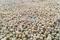 Imagen de archivo de granos de soja en Rio Verde, estado de Goiás, Brasil. 31 de enero, 2019. REUTERS/Jose Roberto Gomes/Archivo
